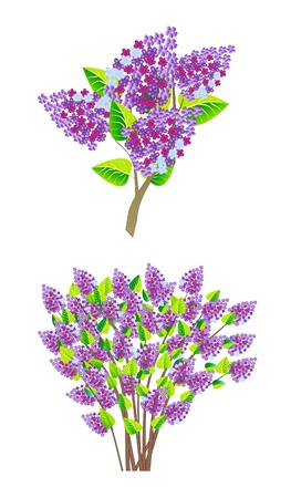 branch of lilac Stock Vector - 12832000