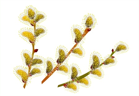 beautiful sprig of willow Stock Vector - 12995274
