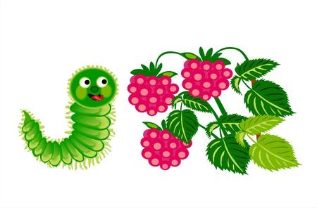 Caterpillar with raspberry Stock Vector - 13176935