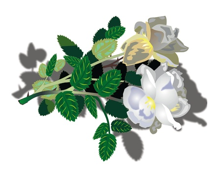 beautiful white flowers Illustration