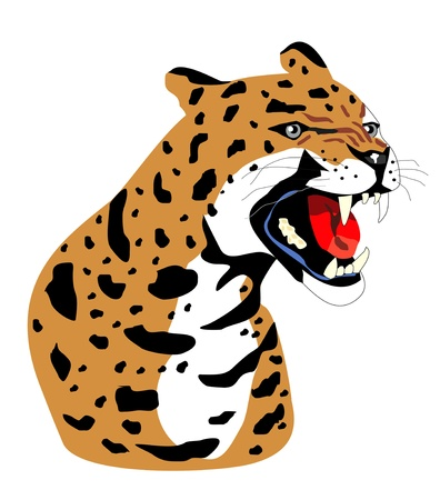 Isolated leopard Vector