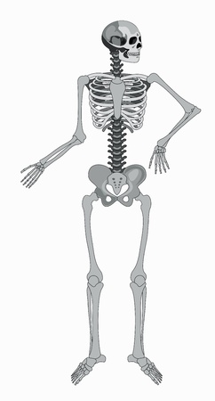 vector isolated human skeleton