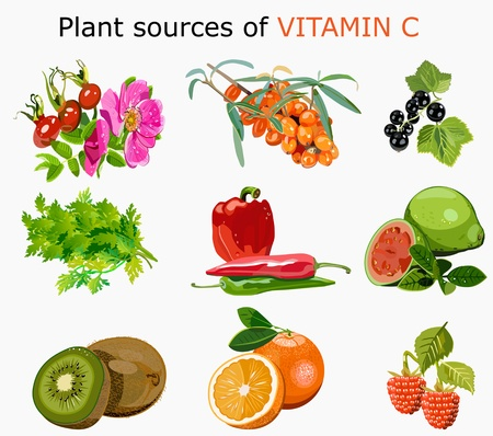 Plant sources of Vitamin C Illustration