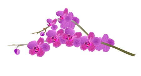 vector image of beautiful orchid branch Illustration