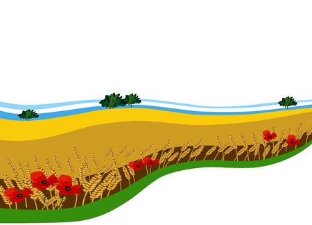 corn poppy: background (banner) with the image of a wheat field with poppies