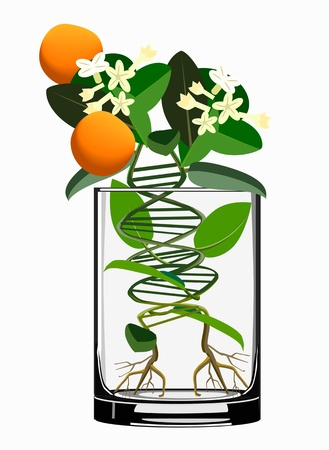 transgenic plants concept Stock Vector - 16998999