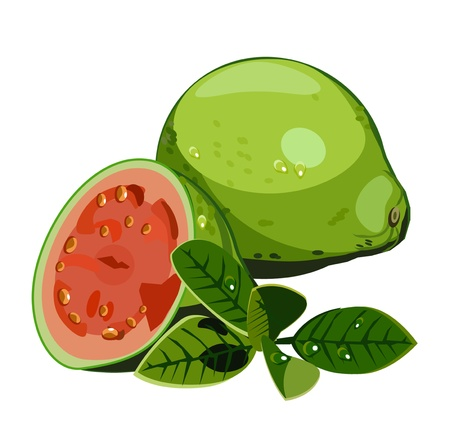 vector isolated guava Illustration