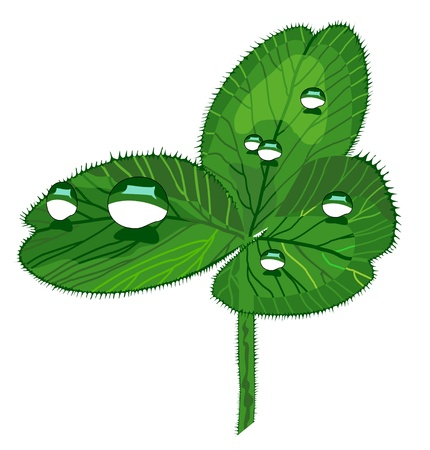 shamrock with drops Stock Vector - 17380177