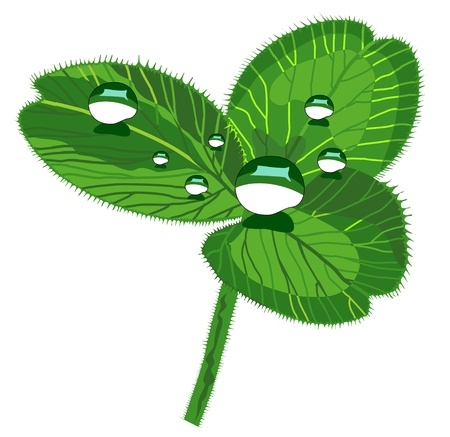 vector isolated clover with drops Stock Vector - 17380178