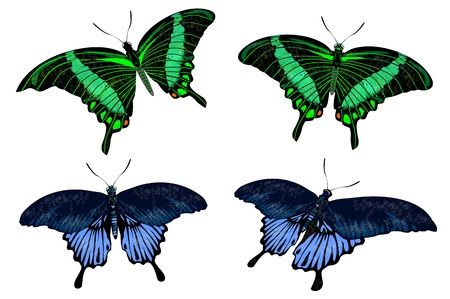 beautiful isolated green and blue butterflies  Illustration