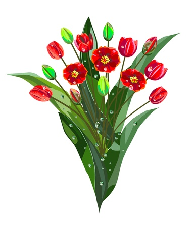 Bouquet of red tulips with drops Stock Vector - 17865196