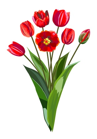 Bouquet of red tulips Stock Vector - 17865192