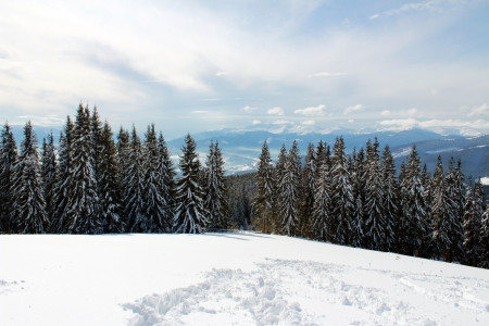 Winter sunny day in the Carpathian Mountains