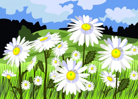 Beautiful meadow with daisies  Illustration