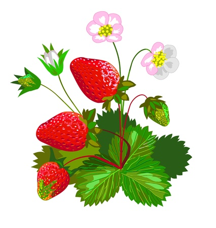 cartoon strawberry: Strawberry with flowers