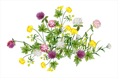 Beautiful composition of wild flowers Stock Vector - 19908064
