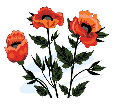 Beautiful bouquet of poppies  Illustration