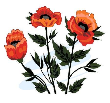 Beautiful bouquet of poppies Stock Vector - 21748713