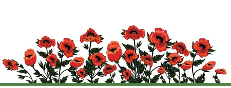 Field of poppies Stock Vector - 21748714