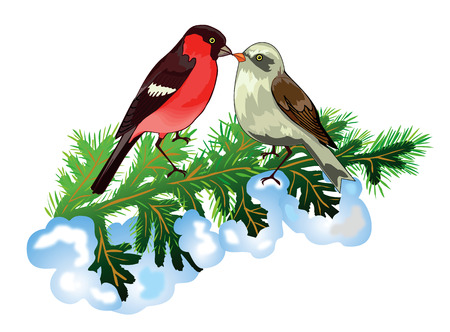Bullfinches on Christmas tree branch Illustration