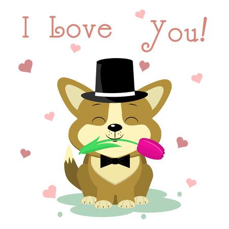 Herzlichen Glückwunsch zum Valentinstag. Ein süßer Corgi-Welpe in Hut und Fliege sitzt und hält eine Tulpenblume vor dem Hintergrund von drei Herzen. Flaches Design, Cartoon-Stil, Vektor.