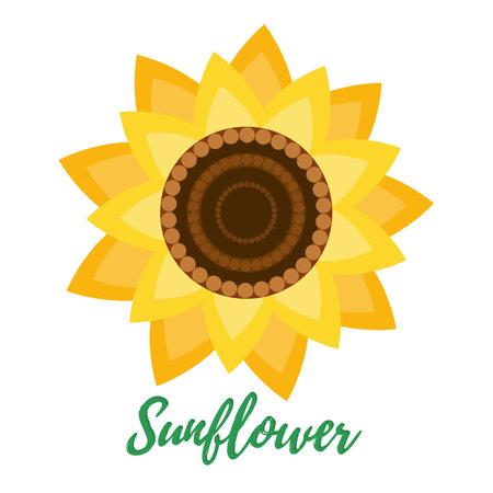 The sunflower flower is isolated on a white background. Ilustração