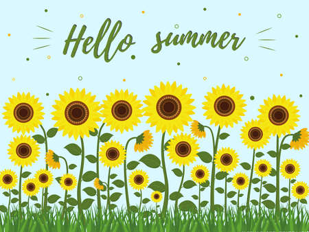 Postcard with sunflowers and green leaves, grass. Hello summer. Vector illustration.