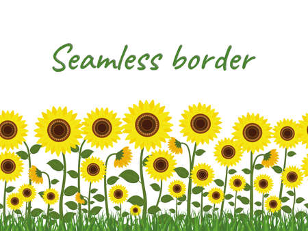 Horizontal seamless border with yellow sunflowers and green grass on a white background. Vector illustration