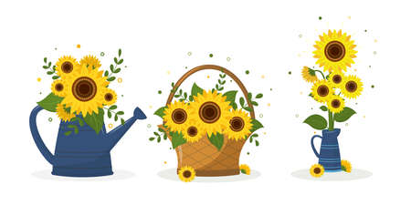 A set of three bouquets of sunflower in a garden watering can, in a woven basket and in a blue jug. Vector illustration for your design
