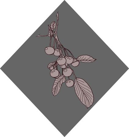 cherry branch: cherry branch harvest leaves