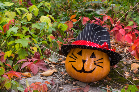 Funny Halloween pumpkin cat in hat on the grass in the garden Stock Photo