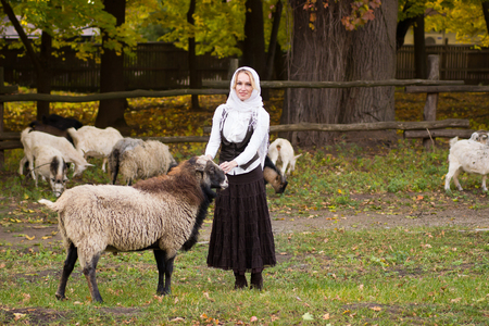 Pretty woman stroking cute sheep on a green glade 스톡 콘텐츠