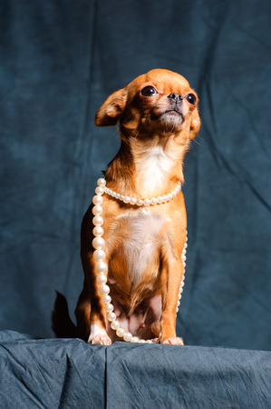 red Chihuahua pearl beads on a dark green background Stock Photo