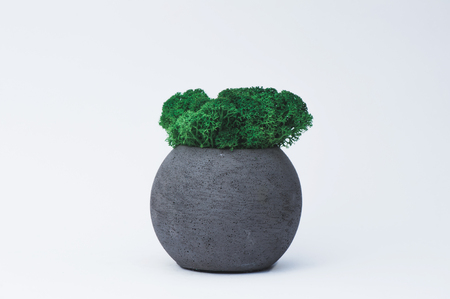 Succulent in a concrete pot on a white  for designers. Imagens