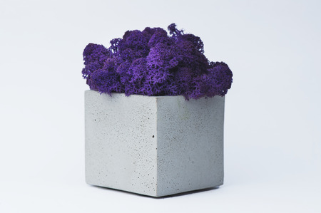 Purple moss in a concrete pot on a white  for designers.