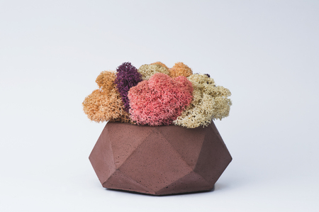 Pink yellow purple and white moss in a concrete pot on a white  for designers. Imagens