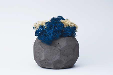Blue and white moss in a concrete pot on a white  for designers.