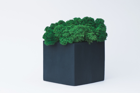 Green moss in a concrete pot on a white  for designers.