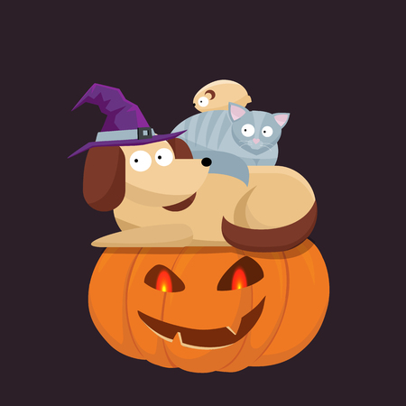 Cute pets, dog, cat in a witch hat sitting on a Halloween pumpkin