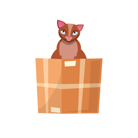cat in the box. Cat in a cardboard box. Kitty inside carton box. Playful curious cat pet looking out of his hiding. Cartoon kitten in a box adoption Flat style vector character illustration.