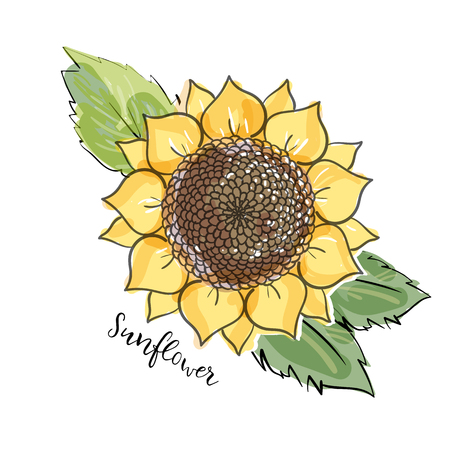 Colorful summer sketch, watercolor, marker copic imitaton style. Bright and blurred sunflower with leaves. Lettering inscription sunflower. big yellow flower. Hand drawn isolated illustration Çizim