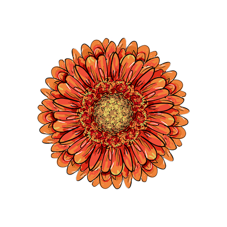 Beautiful orange gerbera isolated on white background. for greeting cards, wedding invitations, birthday, Valentines Day, mothers day, seasonal holidays. Gerber Daisy line sketch illustration