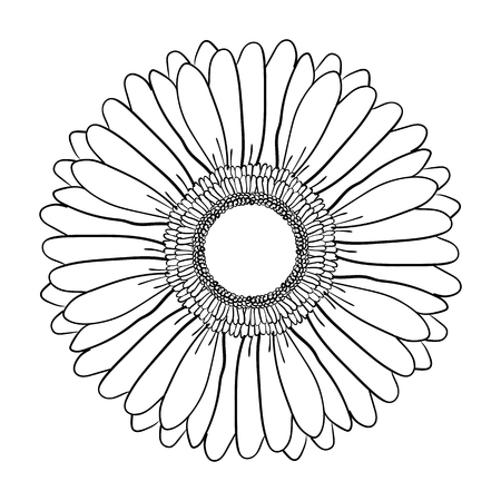 Gerbera flower. Hand drawn illustration vector. Vector realistic black and white hand-drawn image sketch of Gerber Daisy flower.
