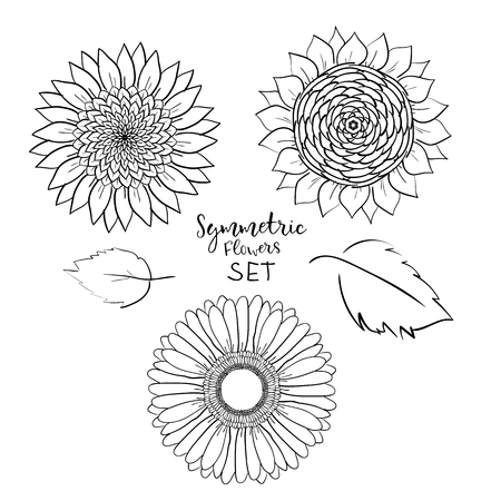Floral symmetric summer flowers set. Hand drawn gerbera, sunflower, Outline Vector illustration on white background. Collection for pattern,template,banner, posters, invitation, greeting card design Çizim