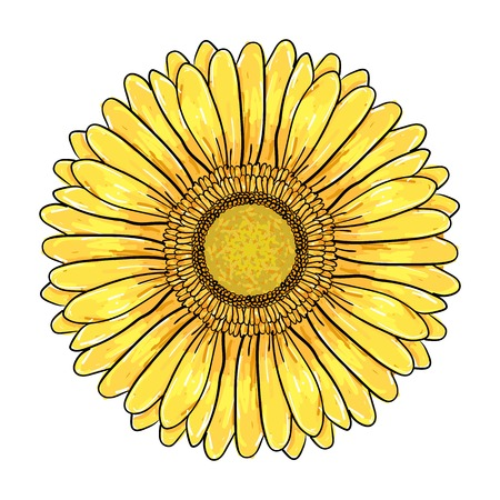 Gerbera Daisy flower, Colorful yellow head Isolated on white background, Floral Illustration. Hand drawn vector pen and ink illustration of Gerbera Daisy flower in Vintage sketch style. Иллюстрация