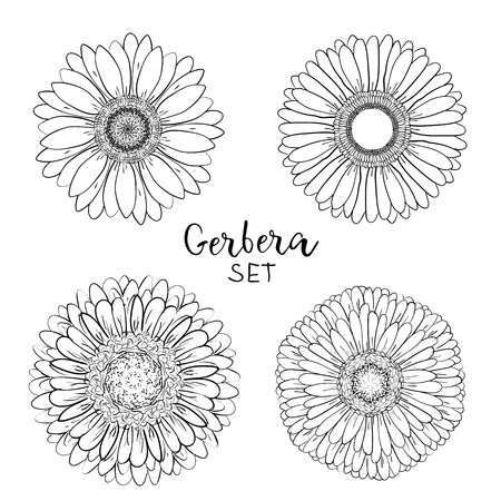 Set of 4 Open petals daisy head flower. Floral Botany drawings. Black and white line art. Gerbera daisy Sketch illustration. Element for design on for greeting cards, wedding invitations, mothers day.