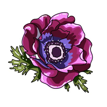 Simgle big hand drawn colored anemone. purple flower with black line path, close-up, on a white background. Botanical vector illustration field flower. Beautiful blossom of Poppy Anemone Coronaria.