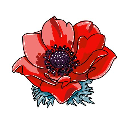 Single red poppy flower blooming closeup. Vector Isolated illustration on a white background. Realistic hand drawn blossom. Floral design object. Summer, spring sign, outlined symbol Иллюстрация