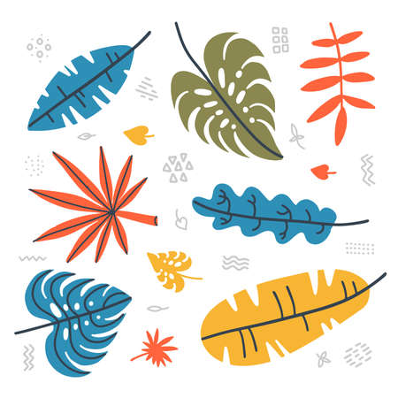 Botanical set of tropical leavesl. Contemporary collection of hand drawn jungle plants - palm leaf, banana leaf, hibiscus. Vector falt hand drawn illustration. Imagens - 151199772