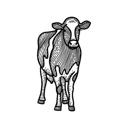 Spotted calf sketch. Black and white hand drawing. Vintage engraving illustration for poster, web. Isolated on white background. Ilustração